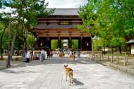 日本奈良风景图片_23张