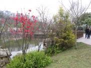 商丘南湖公园风景图片_13张