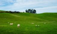 新西兰农场风景图片_11张