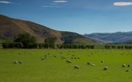 新西蘭田園風光圖片_14張