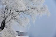 吉林雾凇岛风景图片_12张