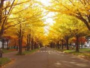 日本札幌美景图片_12张