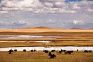 西藏双湖县风景图片_24张