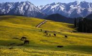 新疆塔里木盆地風景圖片_18張
