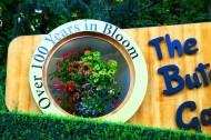 加拿大布查特花园风景图片_7张