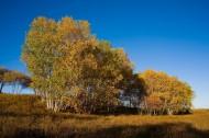 乌兰木统的秋天图片_63张