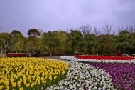 上海鲜花港风景图片_10张