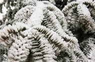 重庆三峡芝兰谷雪景图片_10张