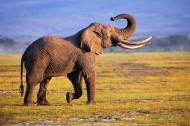 大象侧面特写图片_14张