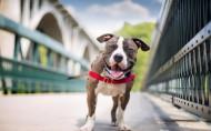 可愛的狗狗微笑圖片_23張