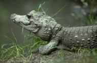 鳄鱼图片_23张