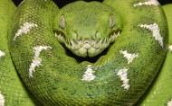 青蛇图片_6张