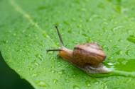爬行的蜗牛图片_9张