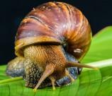伤害极大年夜的非洲大年夜蜗牛图片_15张