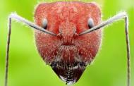 各种蚂蚁微距图片_11张