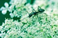 蚂蚁高清图片_12张