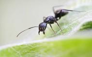 蚂蚁微距图片_10张