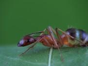 蚂蚁图片_8张