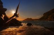 翱翔的海鷗的圖片_12張