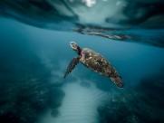 遨游的海龜圖片_11張
