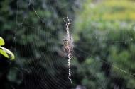 蜘蛛图片_5张