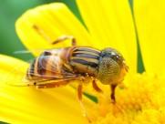 小蜜蜂图片_13张