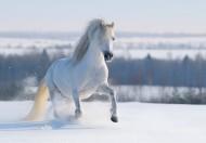 奔跑的駿馬圖片_6張