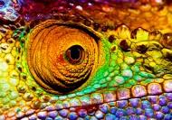 蜥蜴变色龙图片  _12张