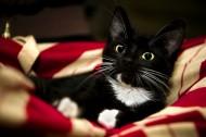 黑猫图片_16张