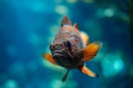 不合种类的鱼图片_13张