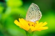 清新自然的蝴蝶图片_24张