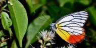 多彩蝴蝶圖片_18張