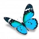 漂亮彩色的蝴蝶图片_20张