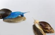 彩色的蜗牛图片_11张