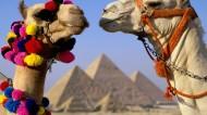 可爱的骆驼图片_11张