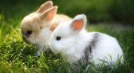 草地里的小兔子图片_8张