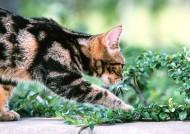 草地玩耍猫咪图片_18张