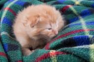 可爱的小猫咪图片_13张