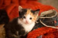 可爱的小猫咪图片_11张