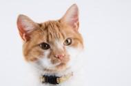 猫咪图片 _10张