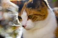 可爱猫咪图片_10张