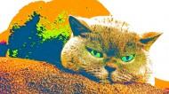 卖萌的猫咪图片_11张