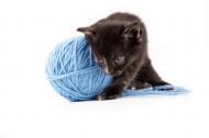 玩毛线团的猫咪图片_14张