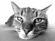 猫咪图片_19张