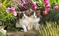 可爱猫咪图片_20张