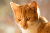 猫咪图片_8张