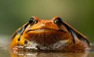 丑陋的青蛙图片_10张