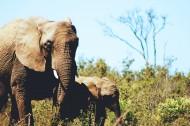 丛林中的大年夜象图片_14张