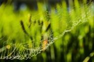 带露珠的蜘蛛网图片_9张