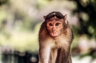 呆萌的猴子图片_12张